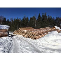 Зимний лес для строительства дома из бруса